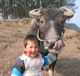 boy with water buffalo in China