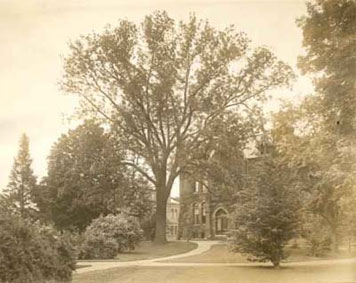 Archival walnut tree photo