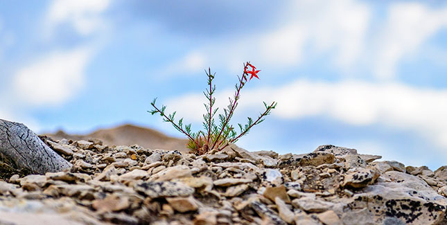 Plant growing in dry ground