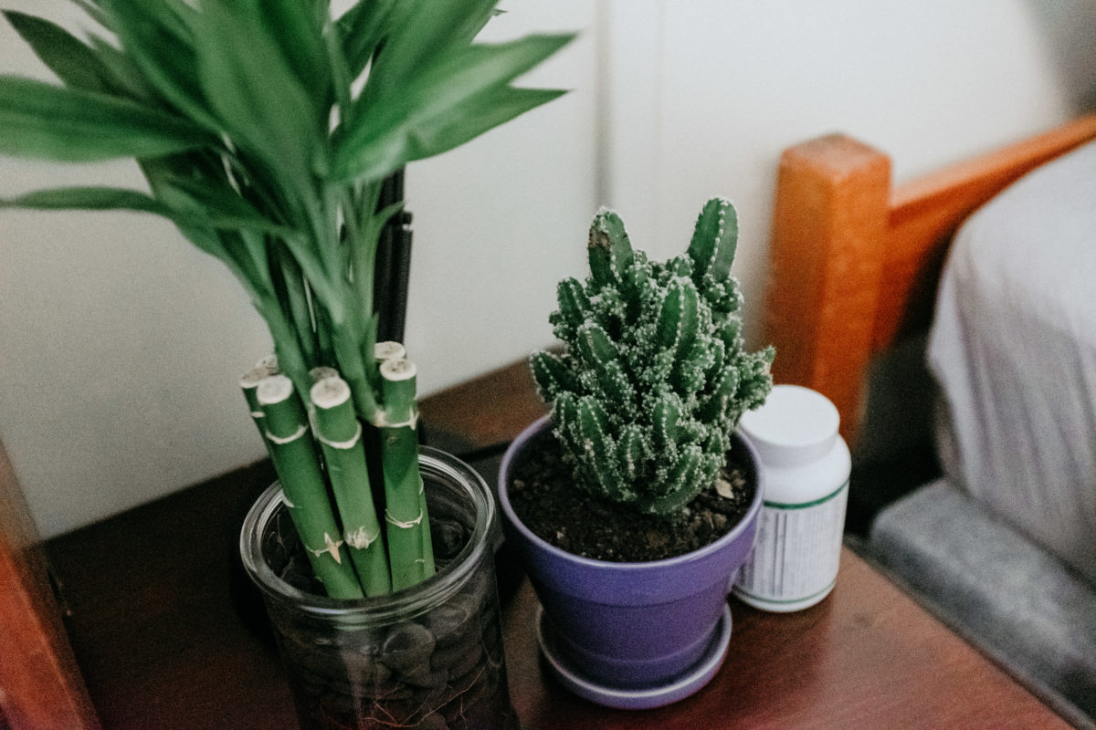 A close-up of a succulent in a purple pot and bamboo sprouts in a glass jar on a student's desk.