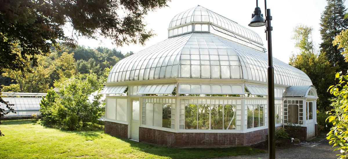 talcott-greenhouse-banner
